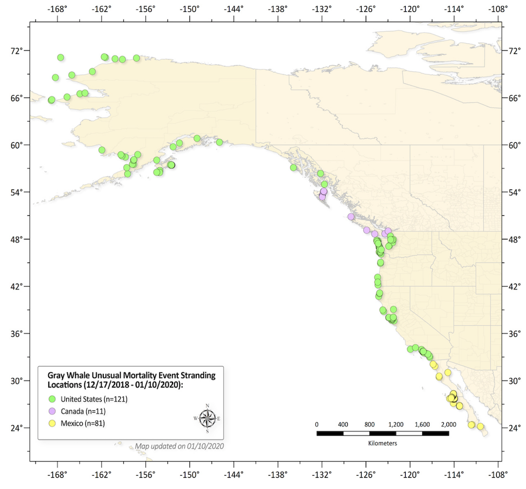 Gray Whale strandings along the west coast of North America through Jan 10, 2020.