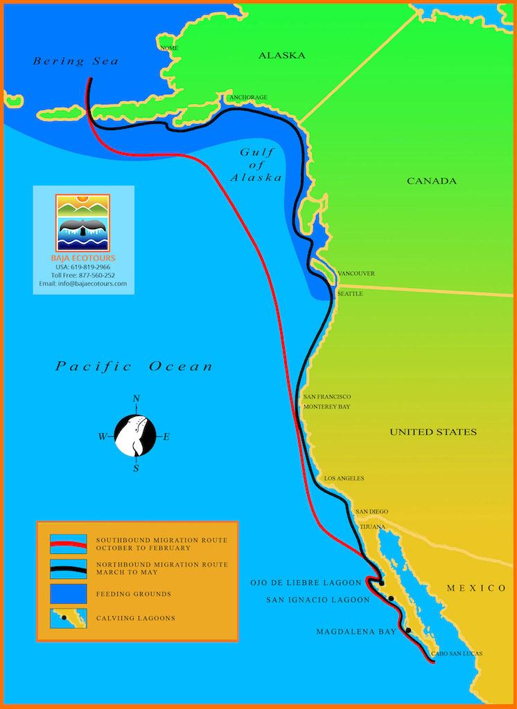 Migration path to San Ignacia Lagoon